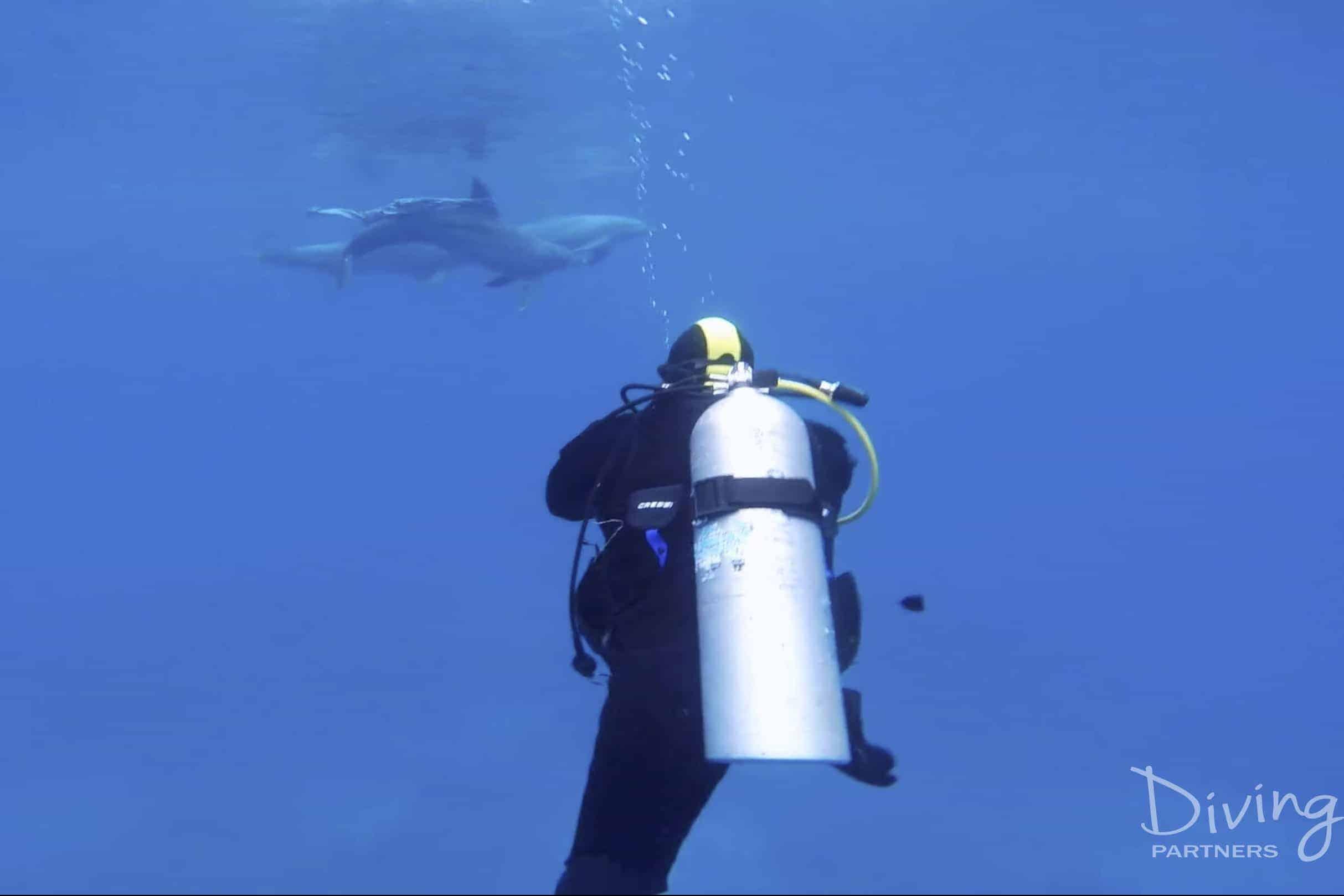 Diving Partners Captura de pantalla 2017-04-20 a la(s) 17.08.01 copia
