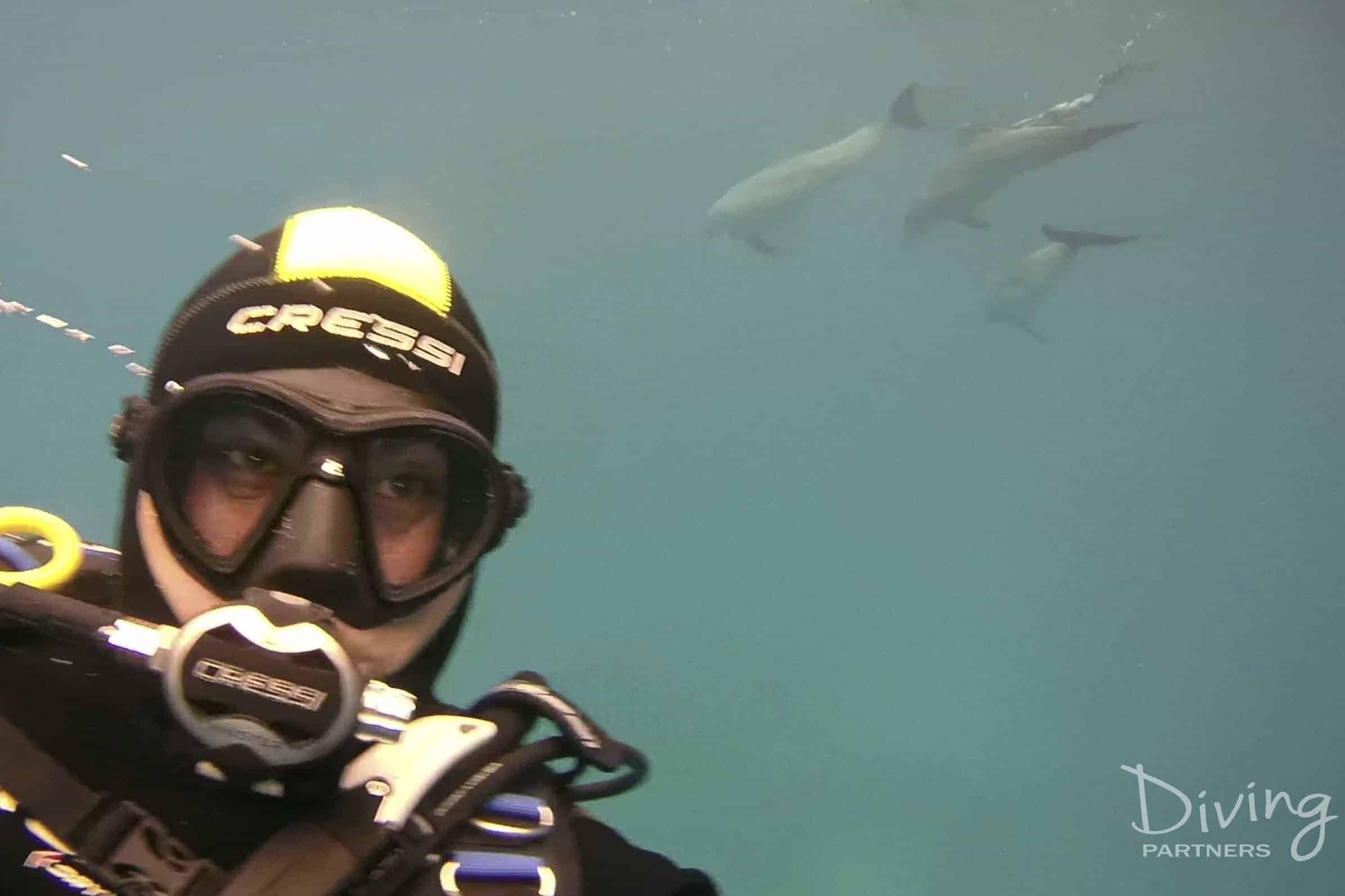 Diving Partners Captura de pantalla 2017-04-20 a la(s) 17.14.09 copia